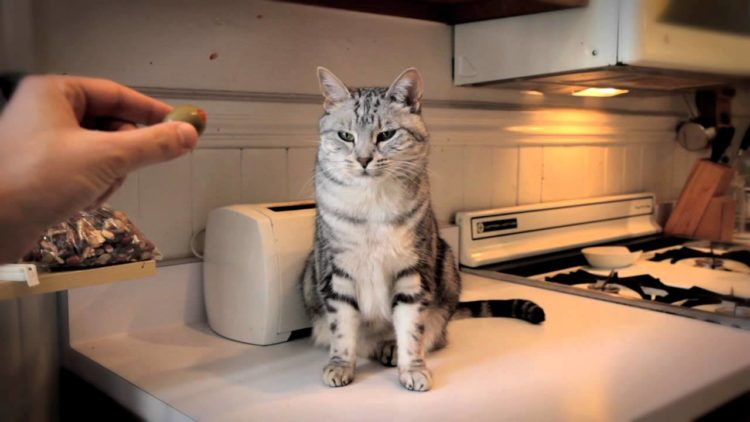 Почему кошки любят оливки?