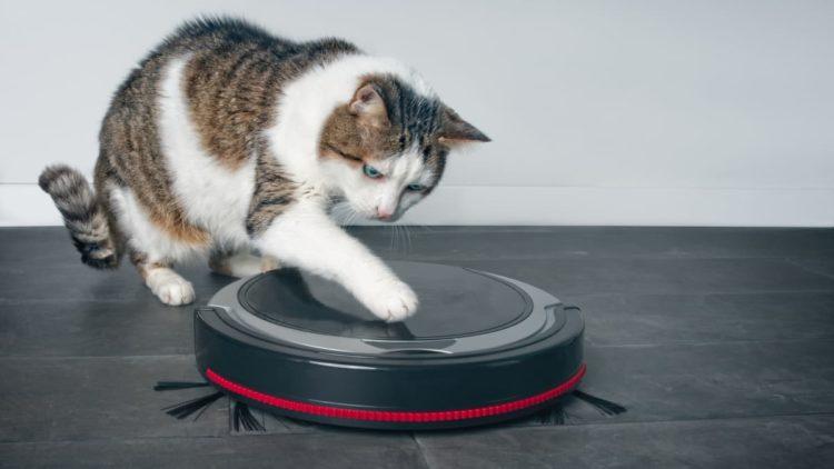 Ваш кот боится пылесоса?