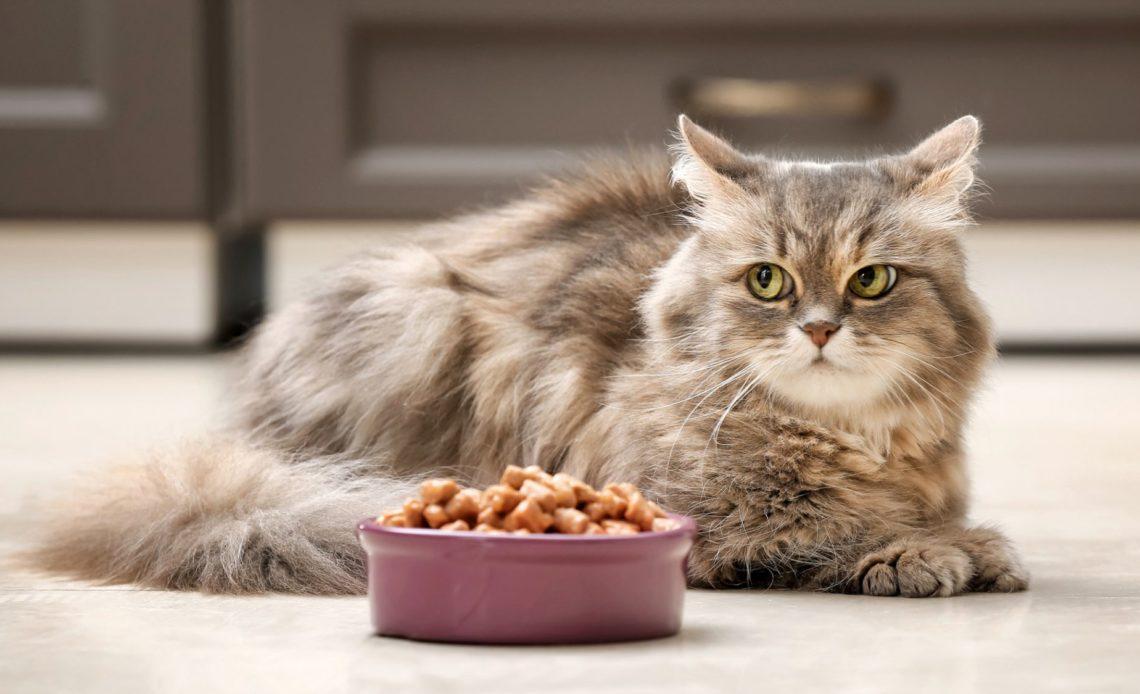 Почему кошка отказывается от еды?