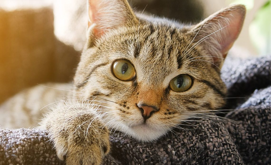 Почему кошка худеет?