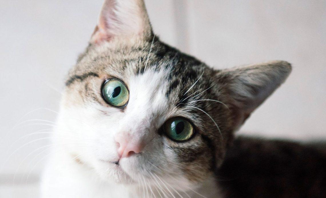Как кошка видит мир