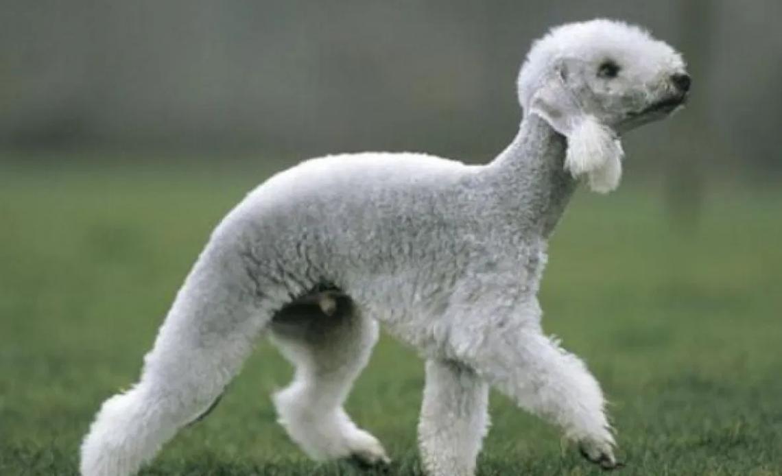 Самые причудливые породы собак в мире
