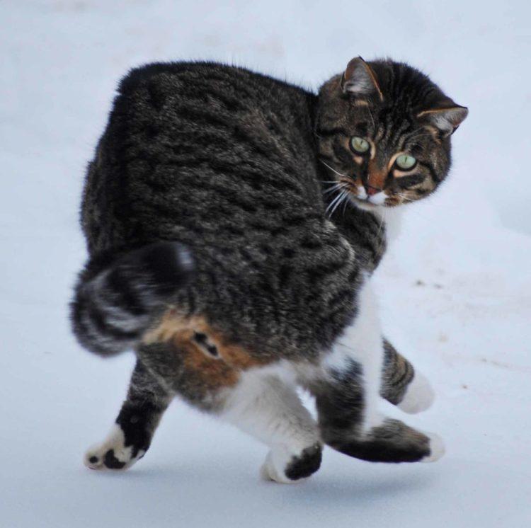 Почему кошка бегает по дому как бешеная?