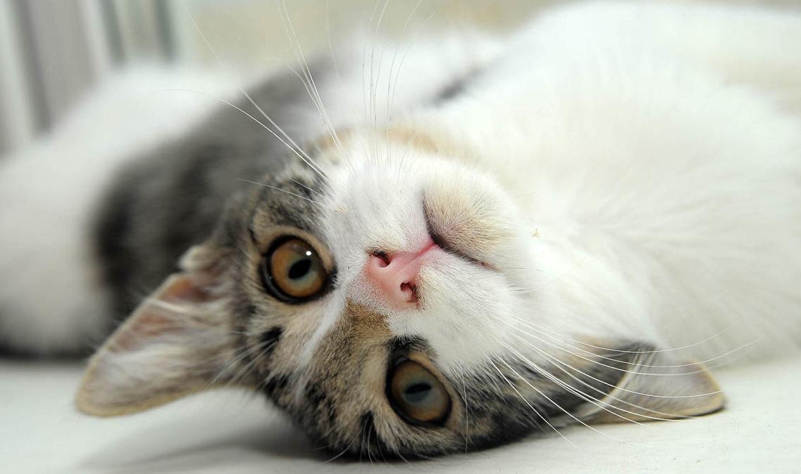 Почему кошка трясет головой?