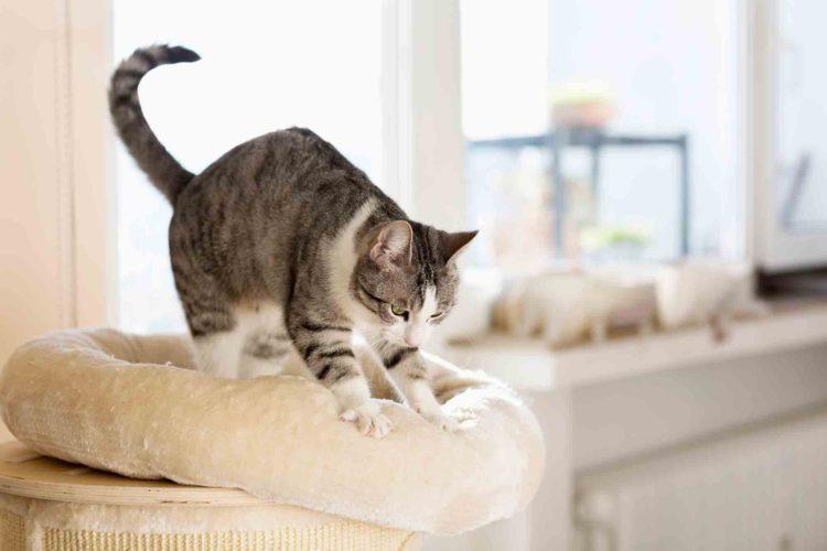 Почему кошки делают массаж лапками?
