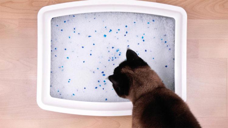 Почему кошки закапывают свои экскременты?
