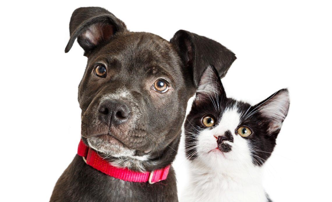 Почему собаки лучше кошек?
