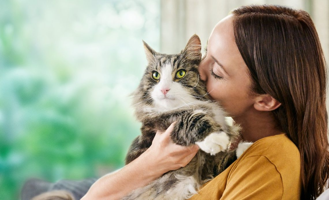 Как кошка выбирает себе хозяина?