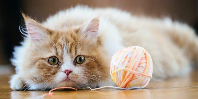 Развлечения с нитками или лентами – не самое безобидное занятие для кошки