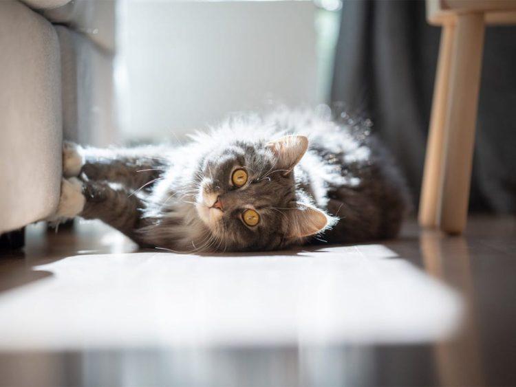 Царапанье – это не только естественная сторона кошачьего поведения, но и необходимый акт