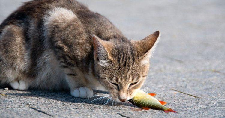 Почему кошки любят рыбу?