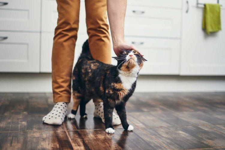 Почему кошка ходит за мной попятам?