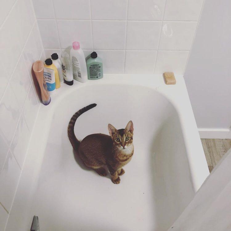 Почему кошка сидит в ванной?