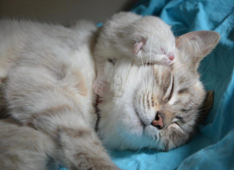 Кошка рожает: как помочь?