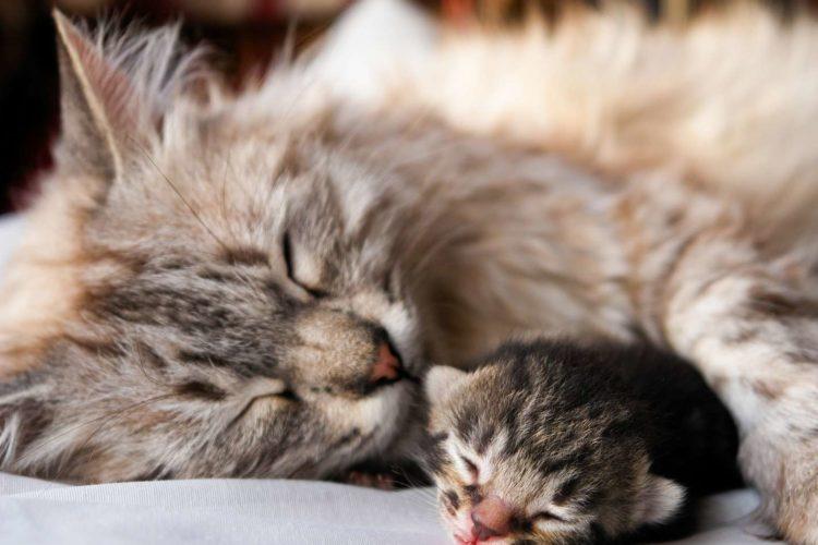 Почему кошка спит с открытыми глазами?