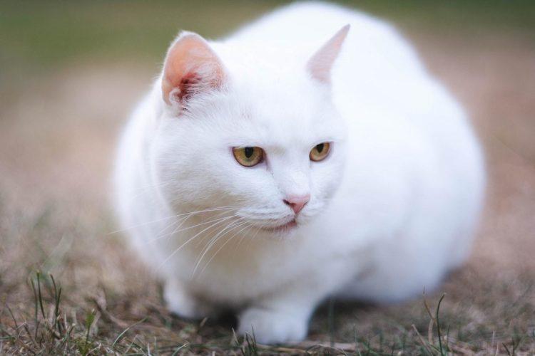 Как назвать белую кошку?