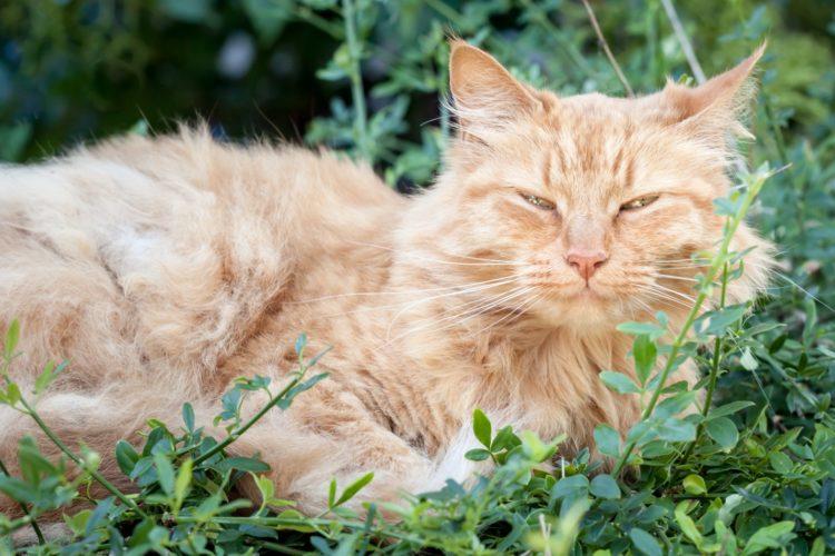 Когда кошки умирают, они много спят, а также прячутся от окружающих