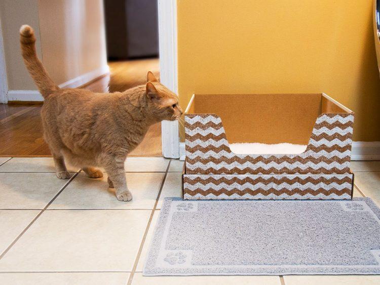 Понаблюдайте за частотой, с которой кошка посещает лоток и внешним видом ее стула