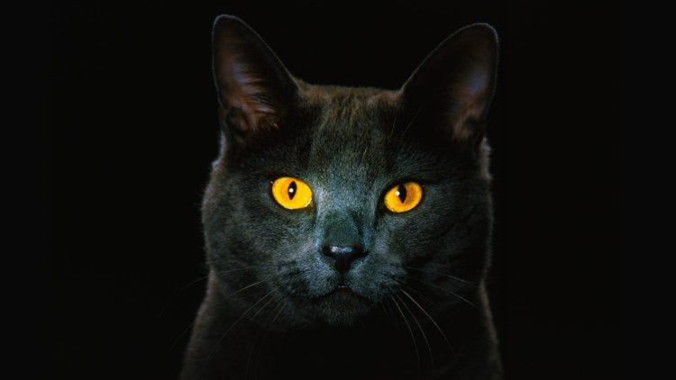 При тусклом свете зрение кошек функционирует в шесть раз лучше человеческого