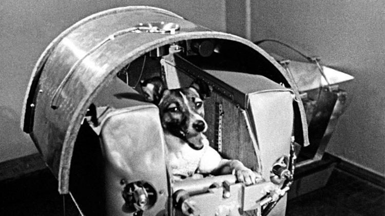 Лайка (собака-космонавт)