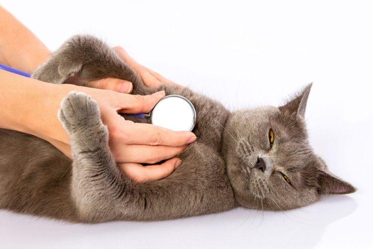 Почему кошка трясется?