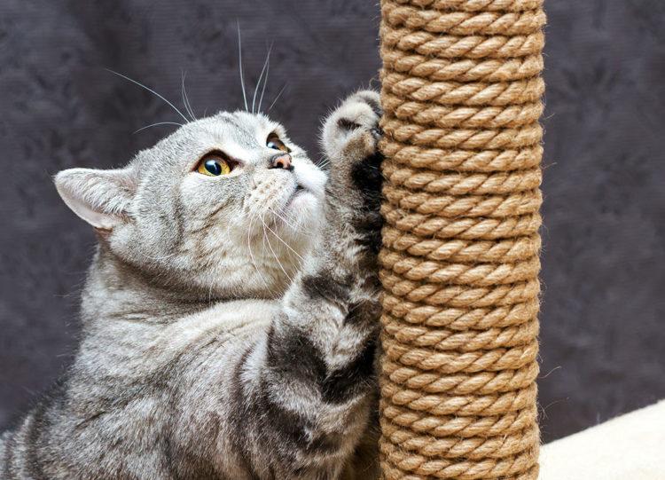Если животное привыкло тянуться вверх, следует установить высокое вертикальное приспособление или дерево