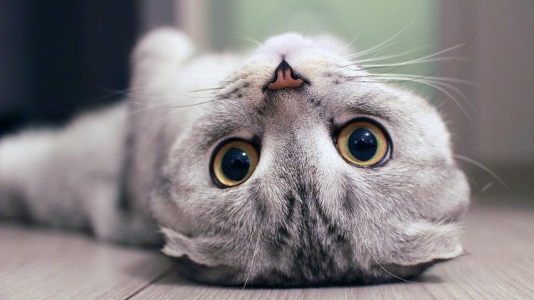 Почему кошкам нравится запах хлорки?