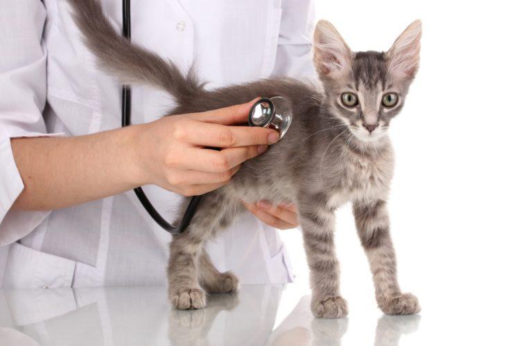 Для постановки диагноза ветеринару понадобится провести полное обследование животного