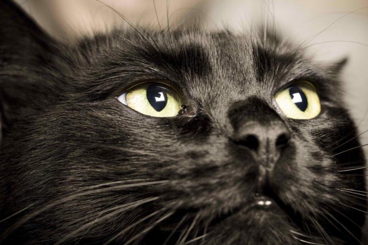 Почему у кошки черный язык?