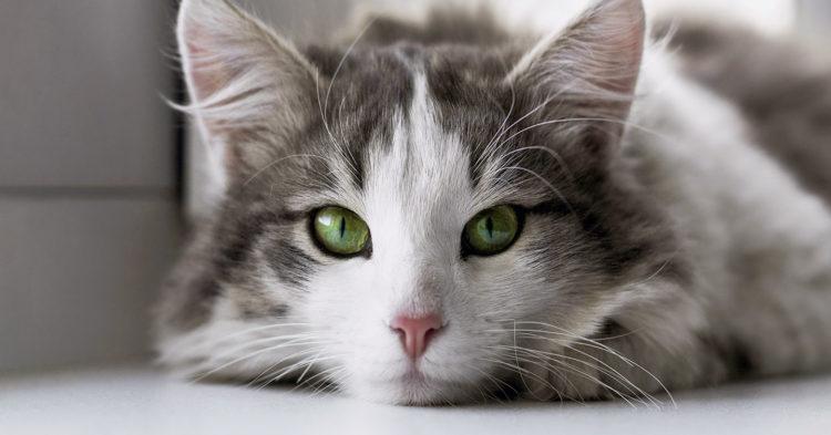 Почему кошки не моргают?