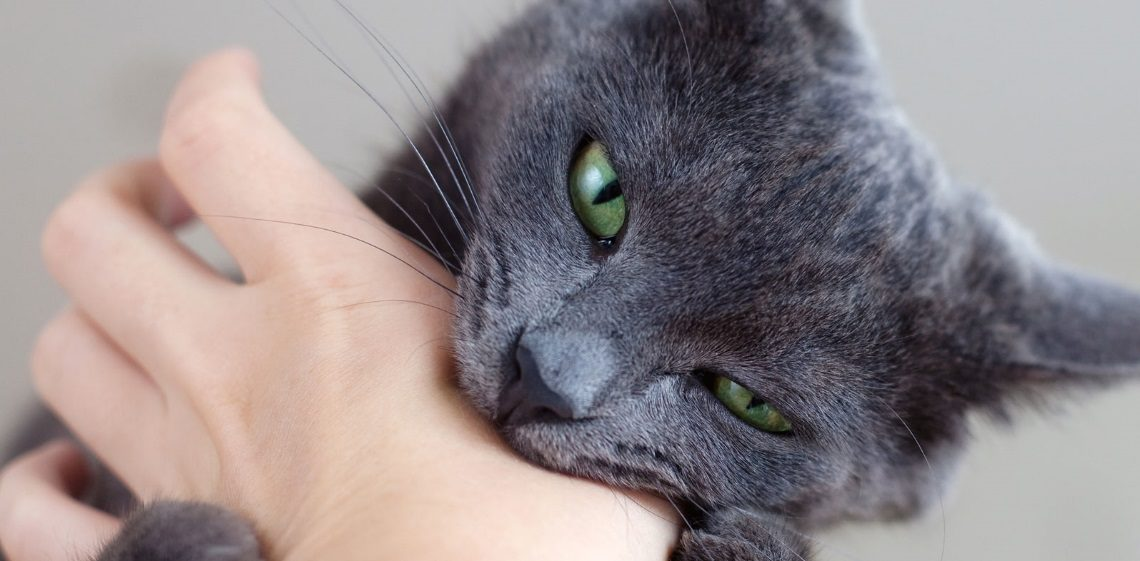 Как отучить кошку кусаться и царапаться?