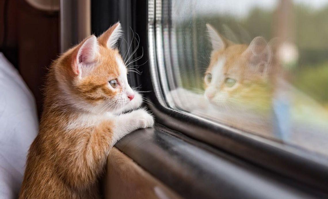 Как перевозить кошку в поезде?