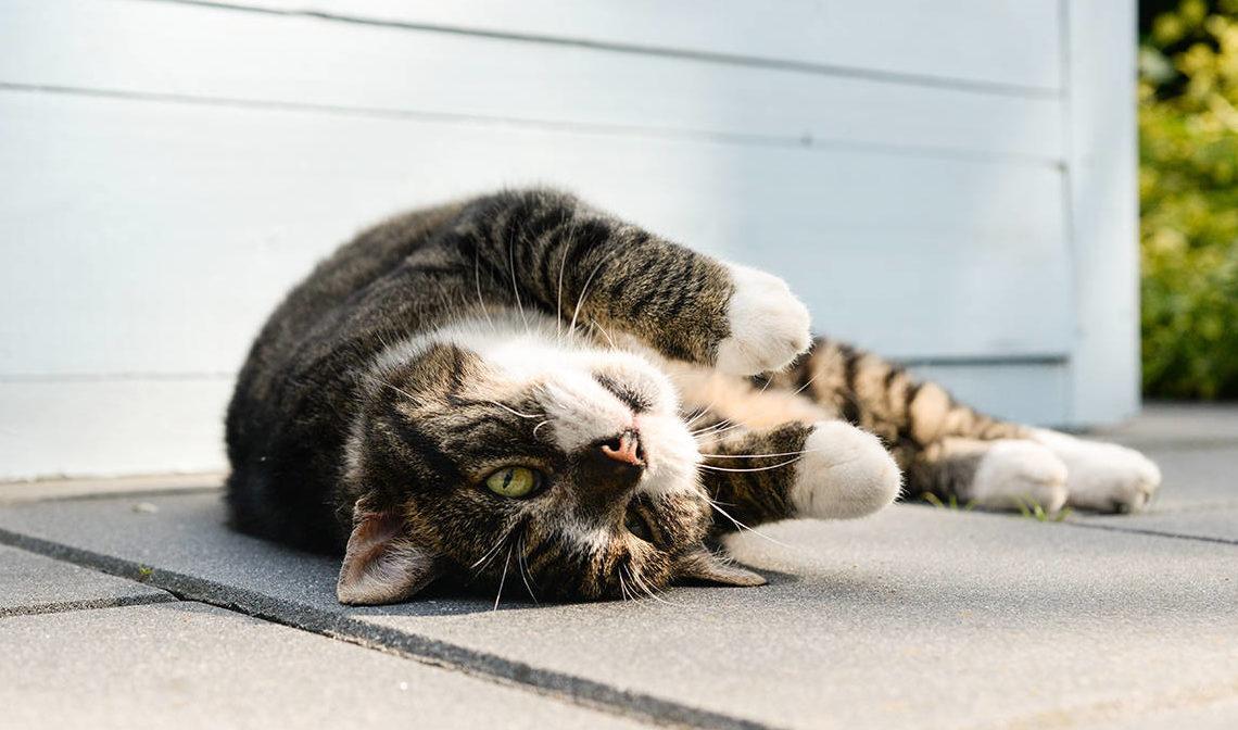 Как понять, что кошка хочет кота?
