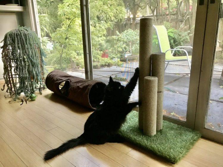 Хвалите кошку, называя по имени, когда она царапает приобретенное приспособление
