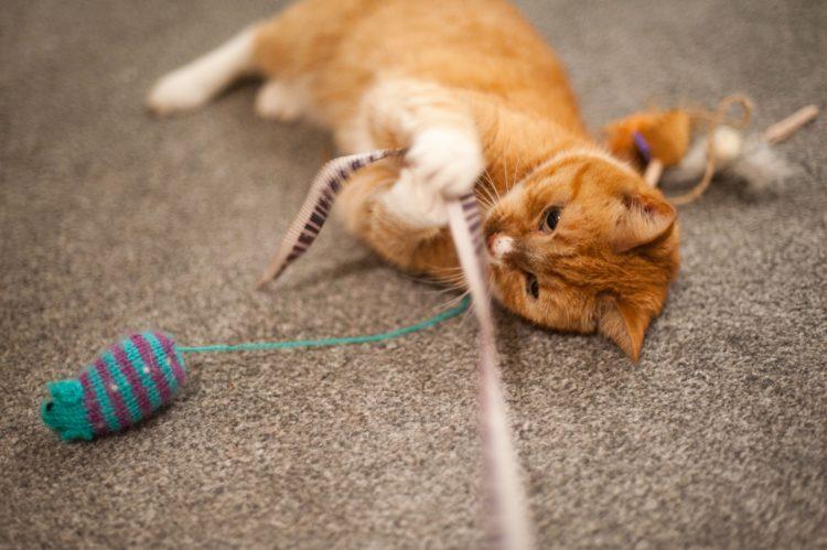 Как приручить кошку?