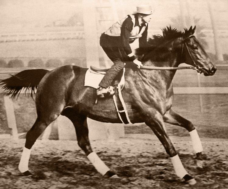 Лошадь Сухарь