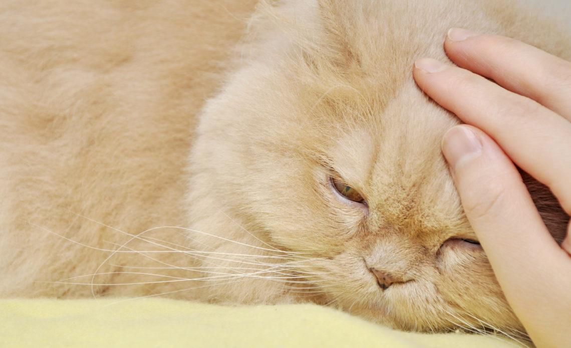 Как умирает кошка от старости