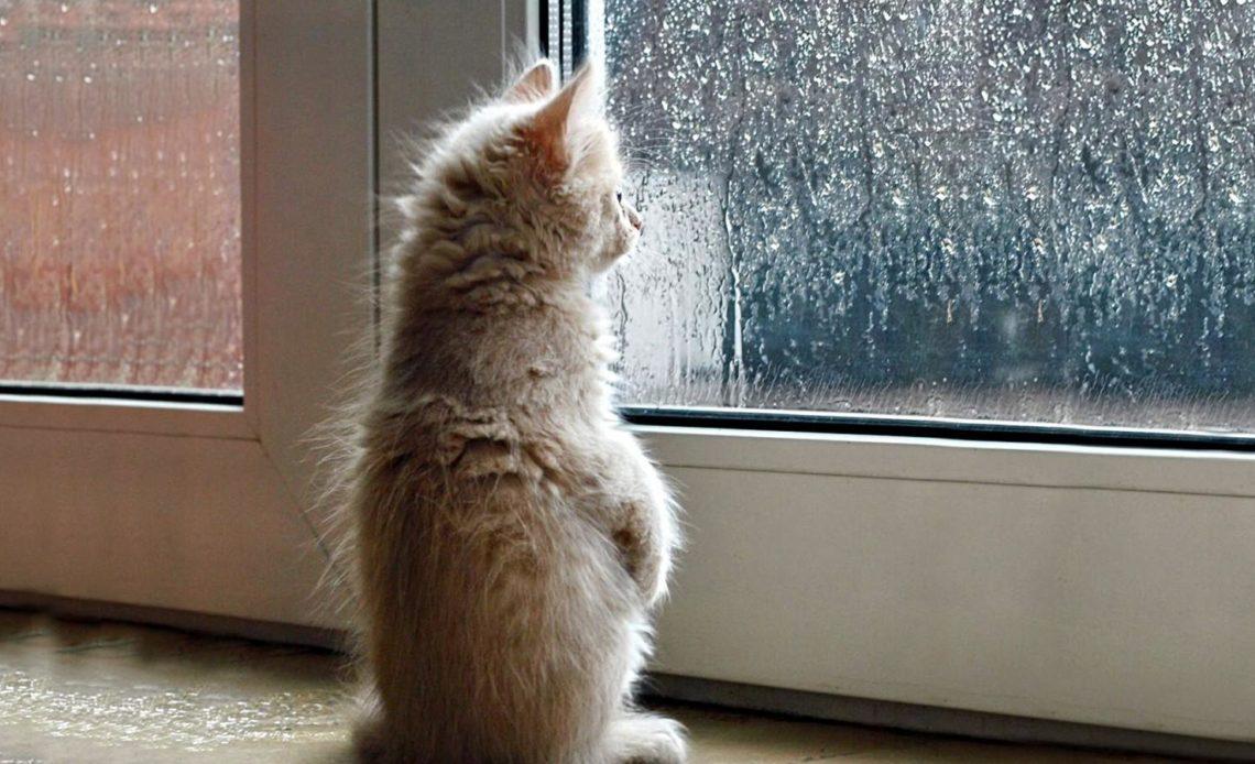 Как кошка предсказывает погоду