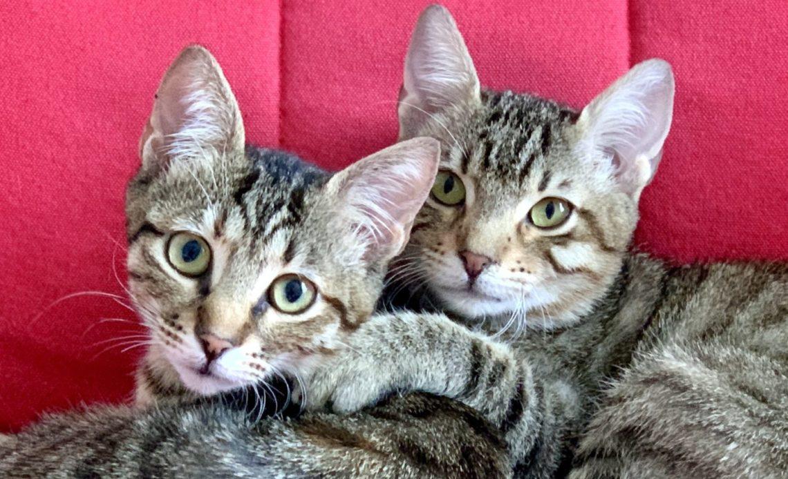 Как общаются кошки