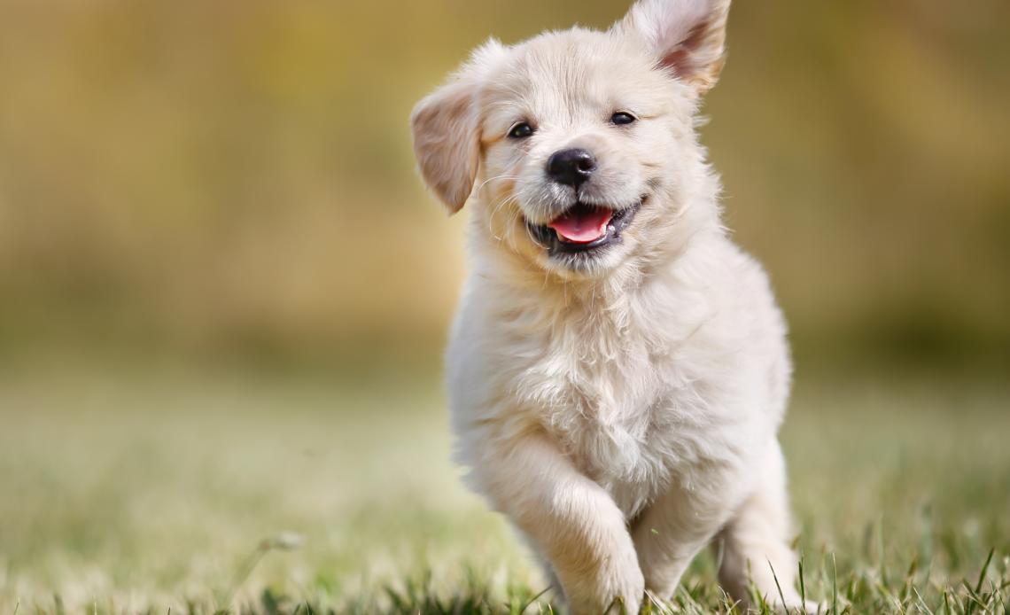 Самые активные породы собак в мире