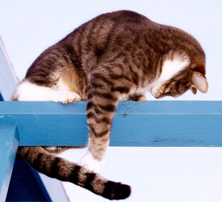 Почему кошка бегает за своим хвостом?