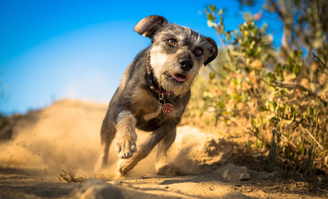 Почему собака убегает от хозяина?