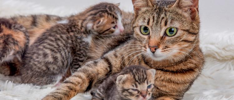 Когда животному потребуется помощь и присутствие хозяина во время родов, оно подаст звуковой сигнал