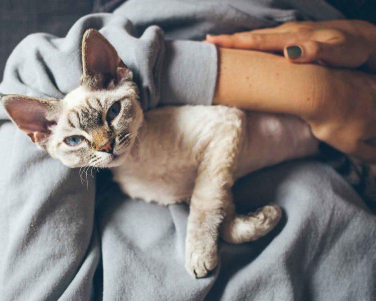Если быть внимательным к кошкам, можно научиться понимать их личностные черты и привычки
