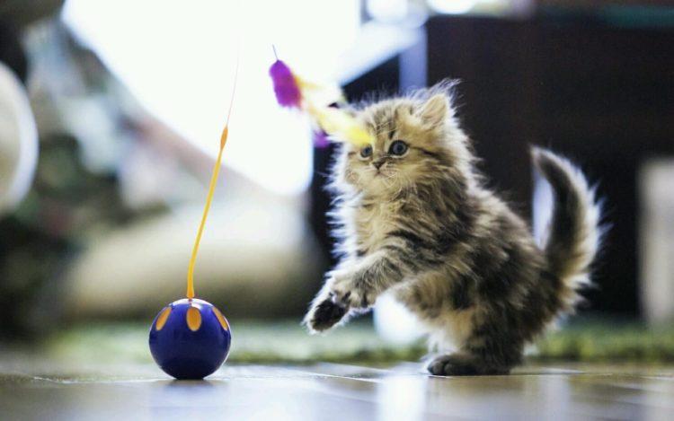Какие игрушки можно сделать для котенка