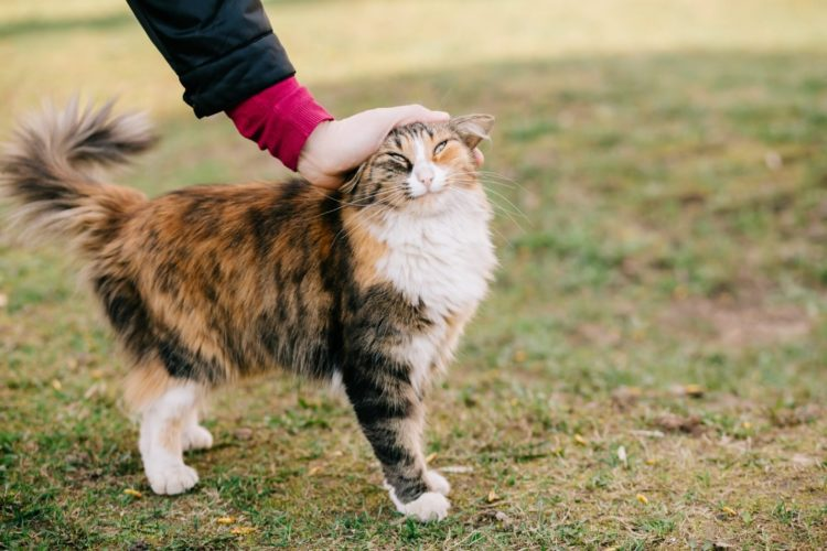 Почему кошки, когда их гладишь, поднимают попу?