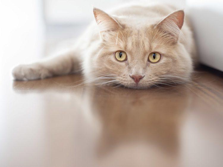Почему люди не любят кошек?