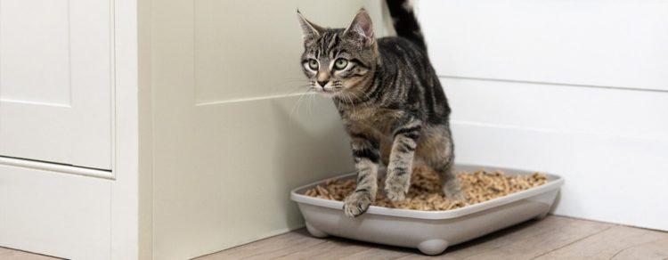 Как приучить кошку к лотку?