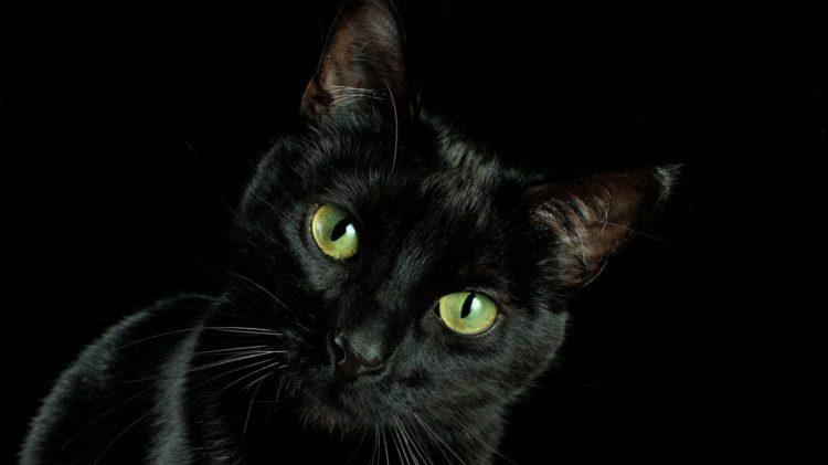 День черной кошки отмечают ежегодно 17 августа