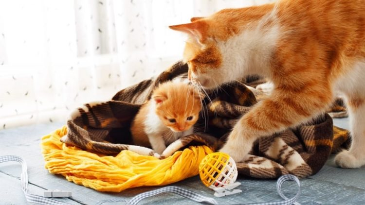 Как долго кошка рожает?